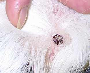 kleur oorsmeer hond